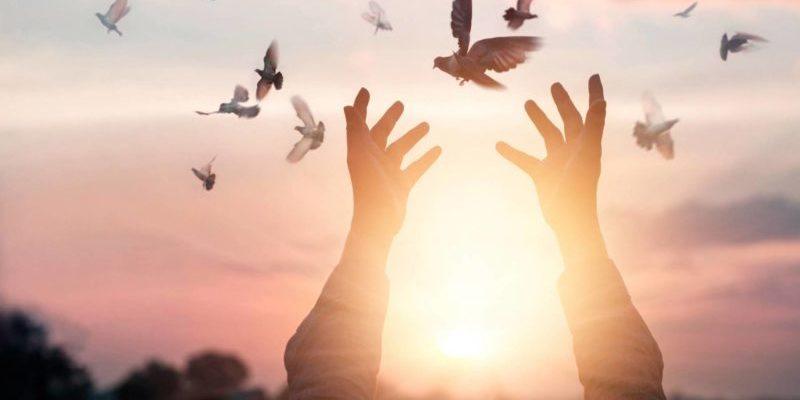 liberte-soleil-oiseaux
